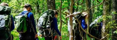 groupe marchant en forêt
